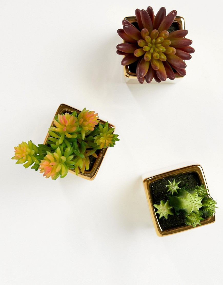 Mimo By Premier Set Of 3 Mini Succulents In Gold Ceramic Pots by Asos